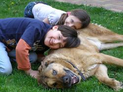 loyalty-dog