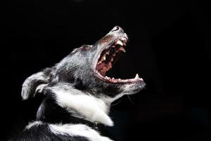 dog-anger